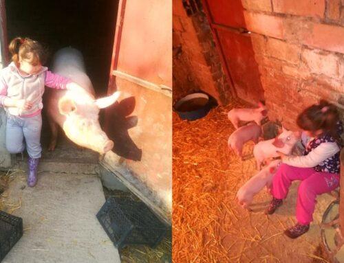 Klinci i ljubimci: Svakom detetu prija seosko okruženje!