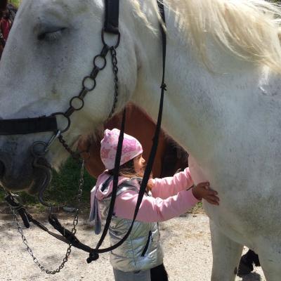 Višnja i konj