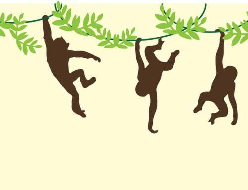 Penjalica izazov: kako se majmuni kreću?