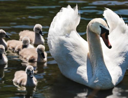 Posmatrajte ptice vodenih staništa